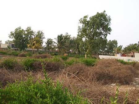 T1388 Terrain en vente à JOAL chez www.immobilierlalagnue.com