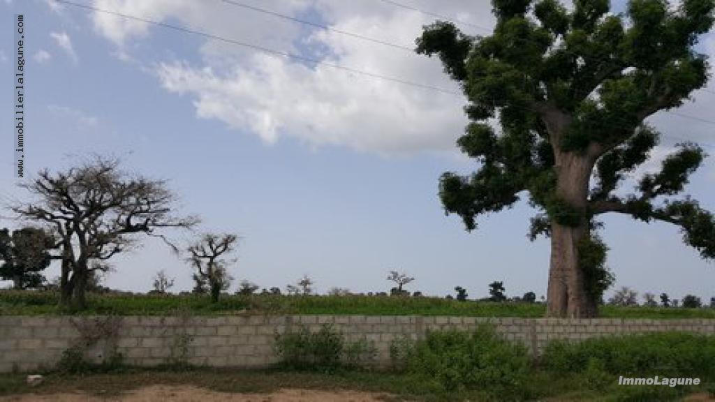 T2332 Terrain en vente à NGUEKHOKH chez www.immobilierlalagnue.com
